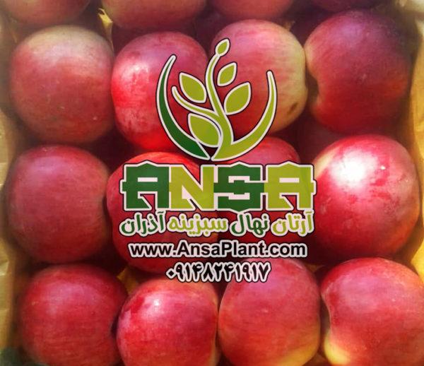 سیب شیک