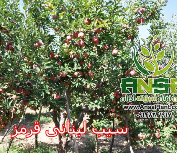 سیب قرمز لبنان