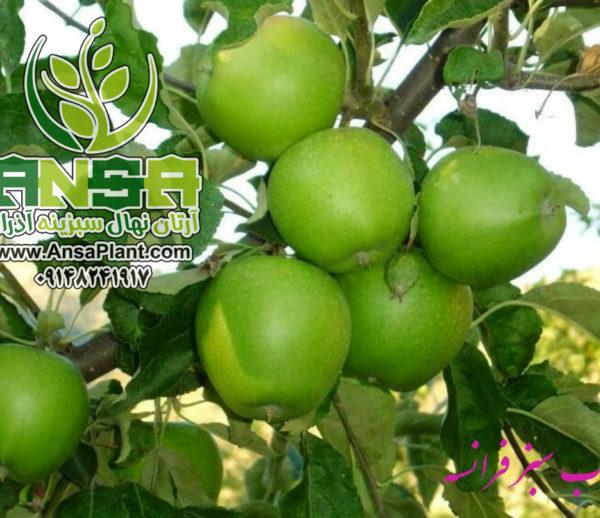سیب سبز فرانسه
