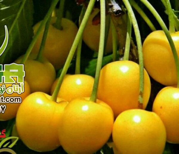 گیلاس پرتقالی